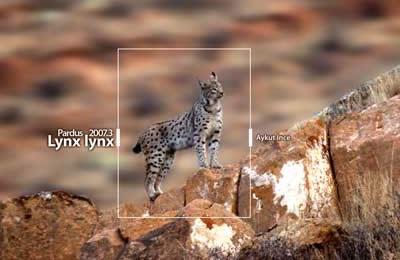 Pardus 2007.3 Lynx lynx yayınlandı