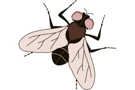 Dokunmatik ekrana sinek konarsa ne olur?