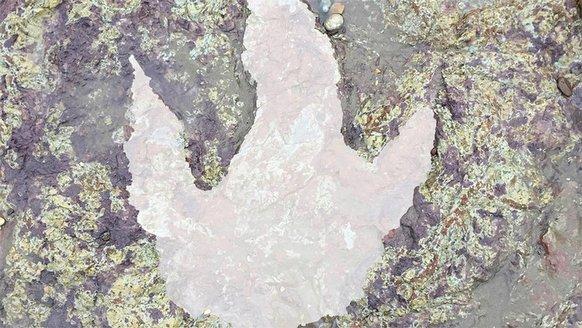 130 milyon yıllık dinozor ayak izi