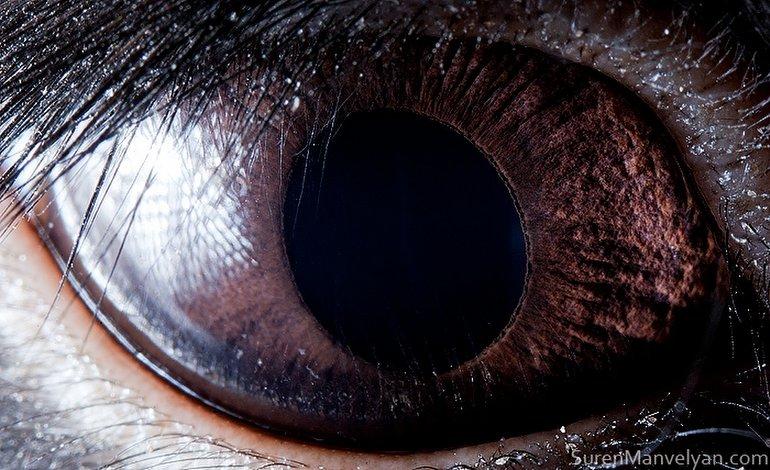 siyah tavşan gözü