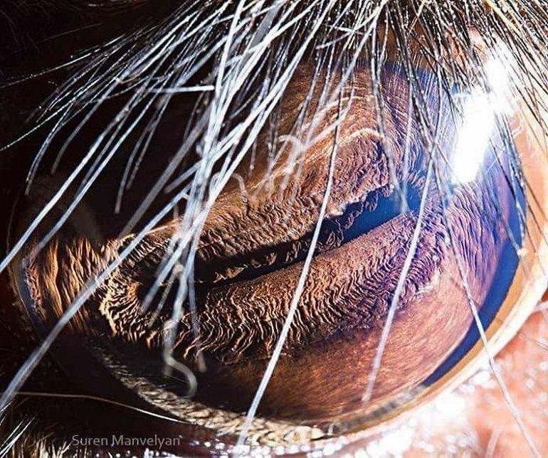 geyik gözü