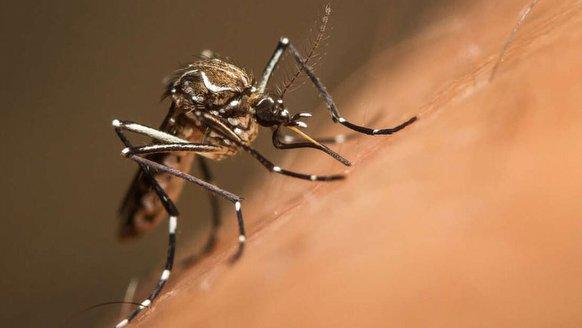 Sivrisinekler, sivrisineklere karşı