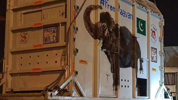 """""""Dünya'nın en yalnız fili"""" taşındı"""