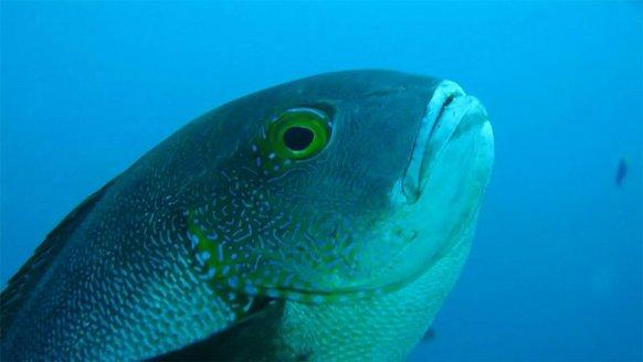 81 yıl yaşayan rekortmen balık