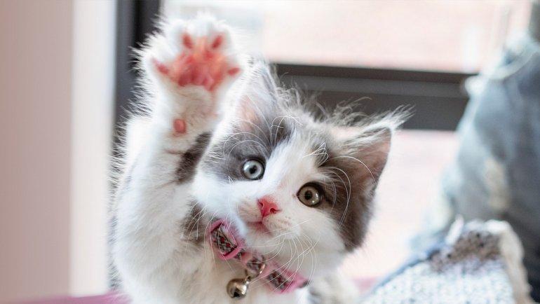 Kediler Bir Anda Yok Olursa, Dünya'da Neler Değişir?