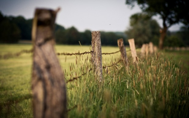 забор природа без смс
