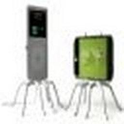 Koruyan örümcek